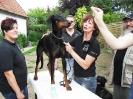 Seminar Erste Hilfe beim Hund