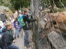 Tierparkrallye 2014_7
